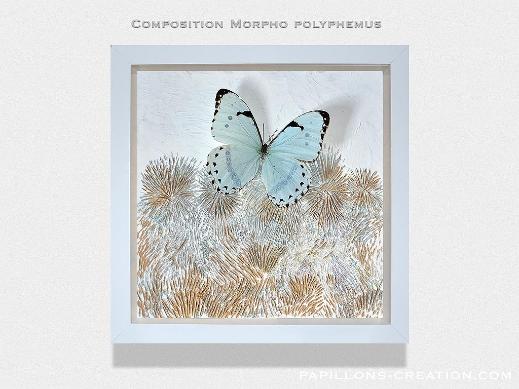 Composition Morpho polyphemus