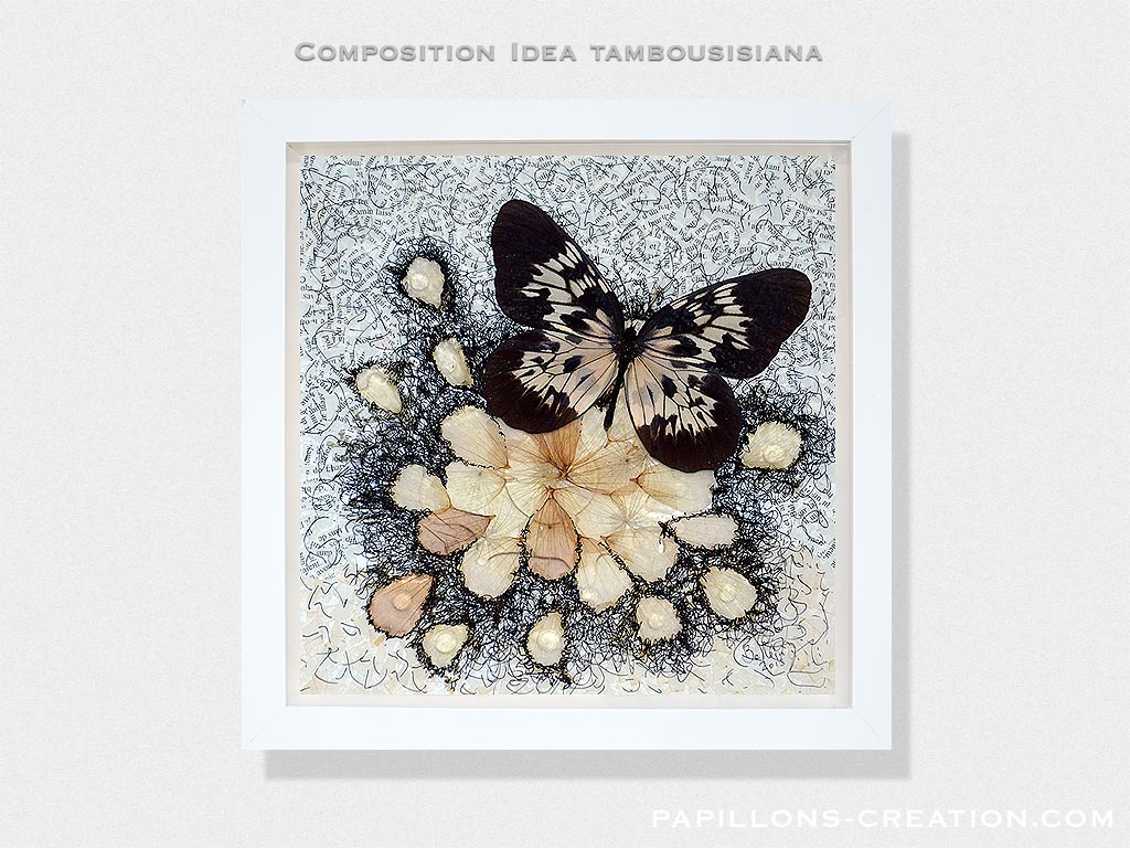 Composition Idea tambousisiana